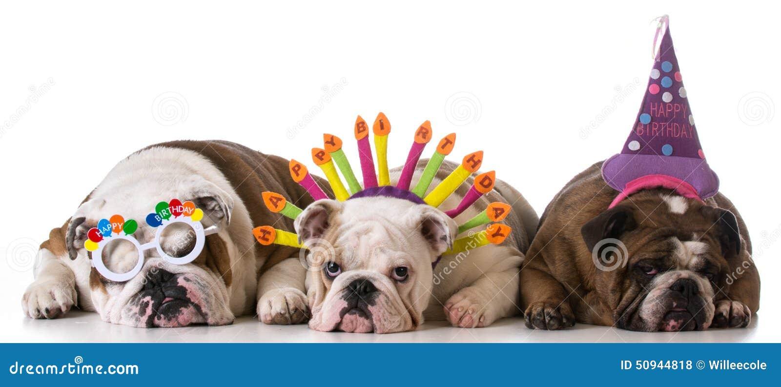 Perros del cumpleaños