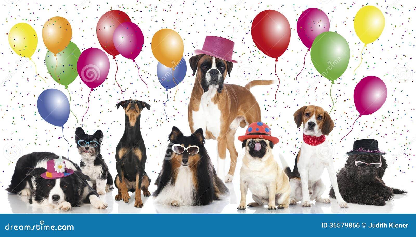 Perros del partido