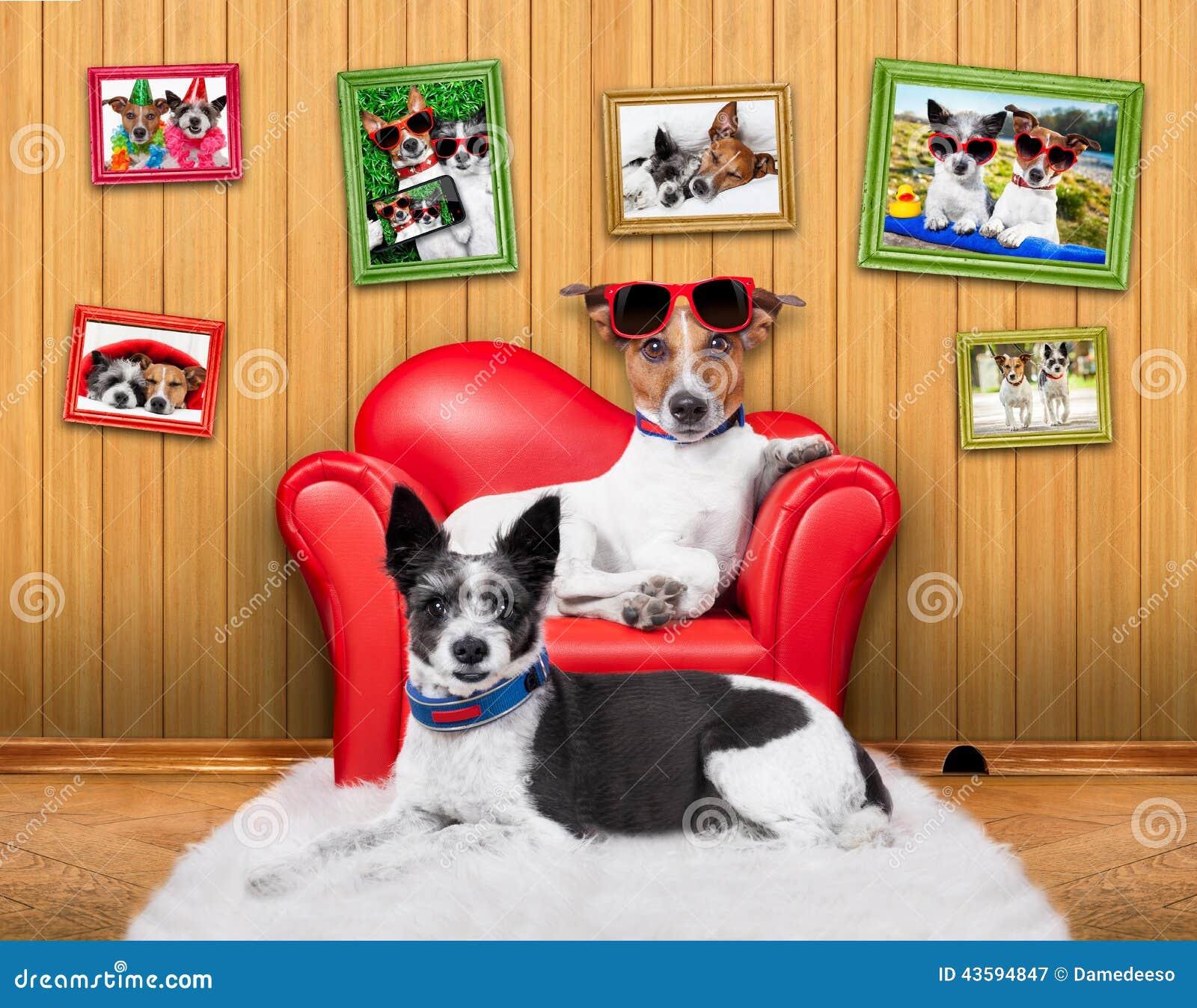 Perros del sofá de los pares del amor