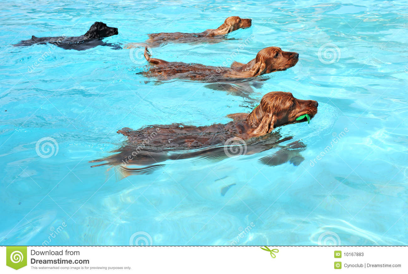 Can Dogs Automatically Swim
