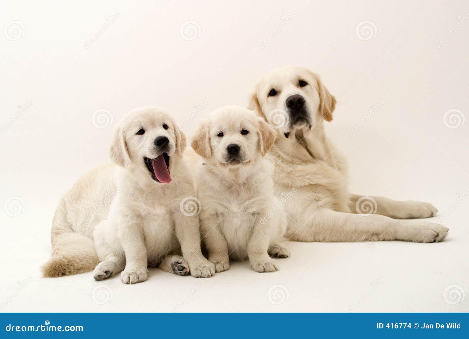 Perros perezosos