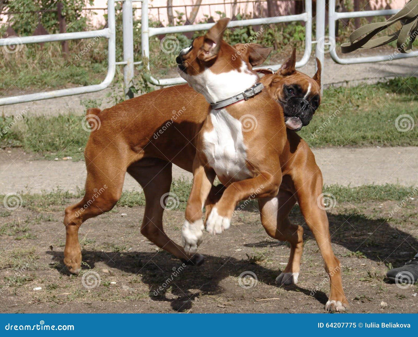 Perros que juegan en el césped