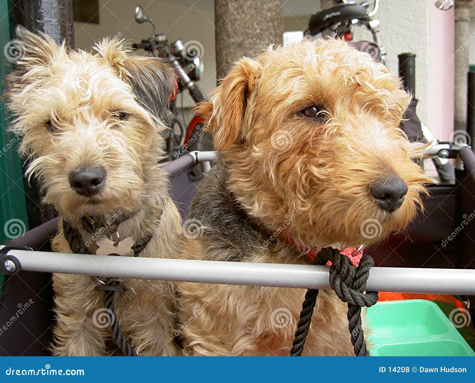 Perros que viajan