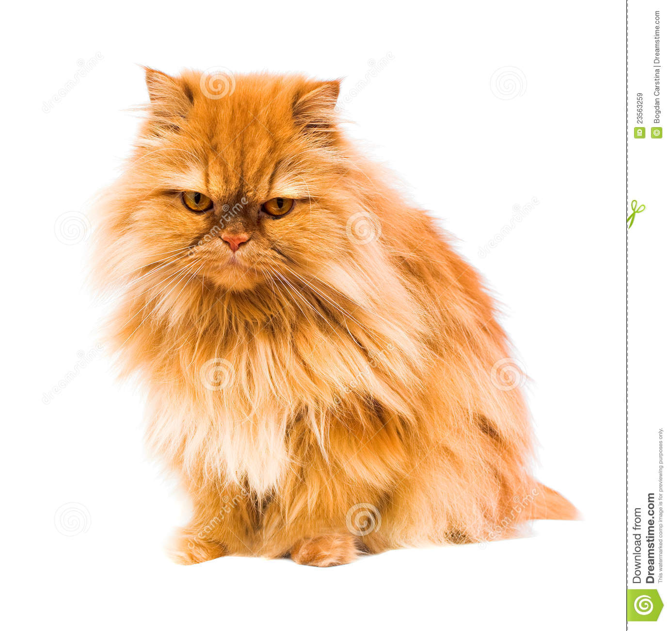 Persian Cat Roy... Free Clipart Of Siamese Cats