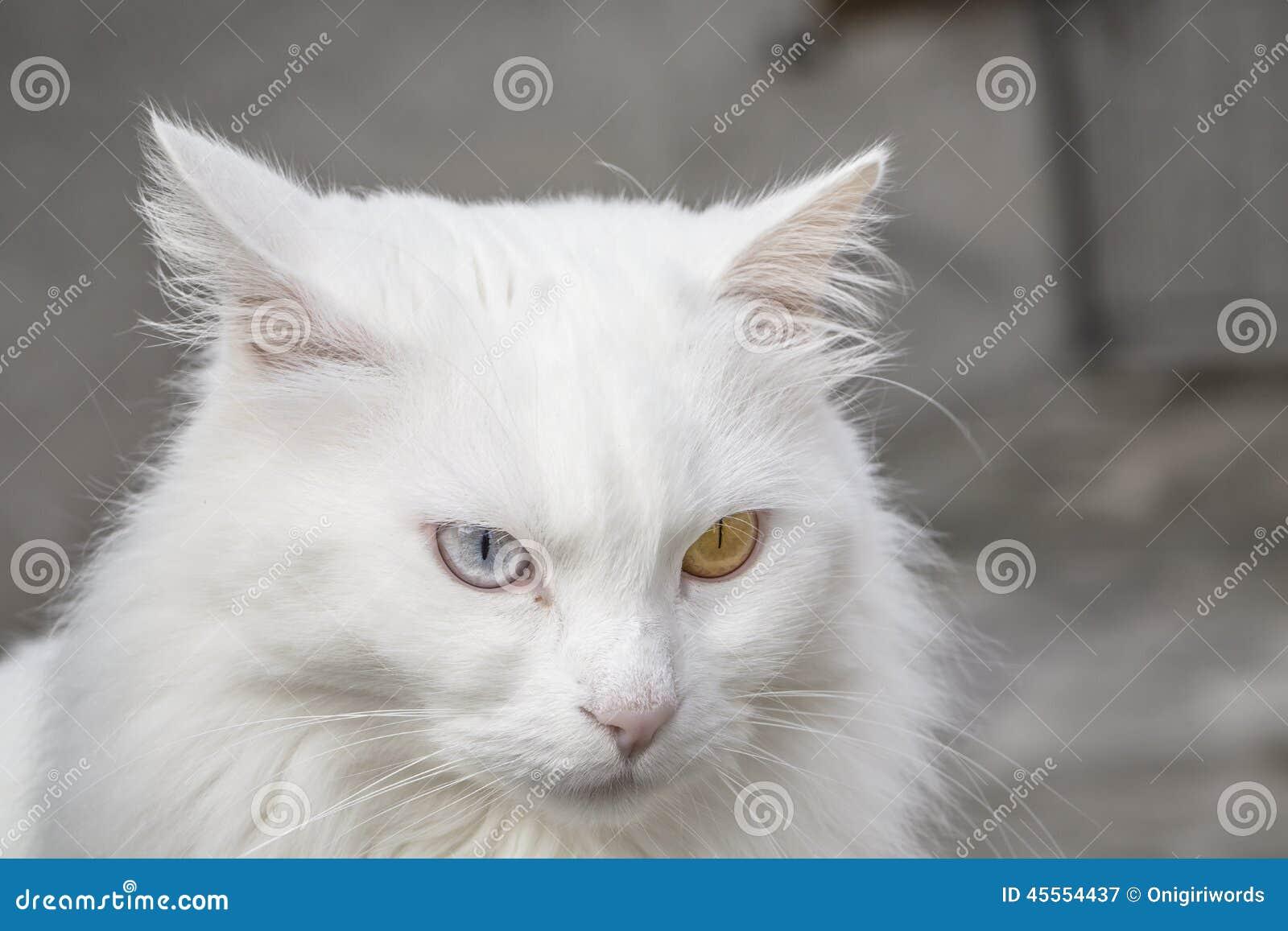 original cheshire cat