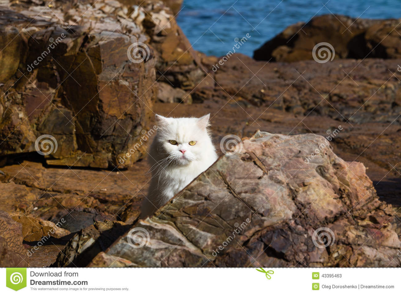 Persian Ragdoll cat sitting relaxed on the beach