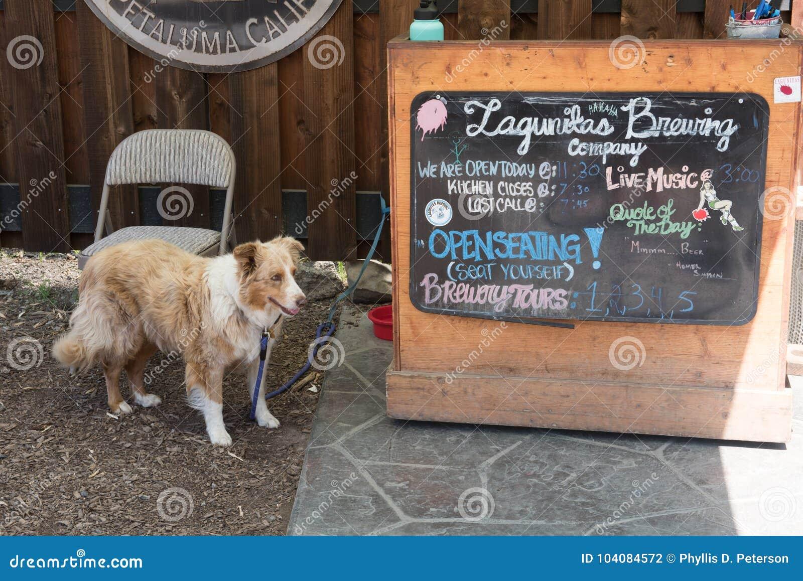 Persiga esperar su amo en la muestra de Lagunitas Brewing Company