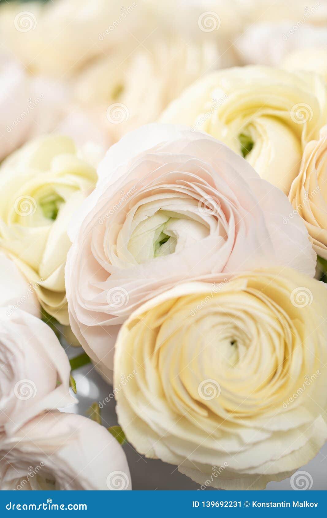 Persisk buttercup Blek grupp - rosa och pastellfärgade gula ranunculusblommor i exponeringsglasvas Vertikal tapet