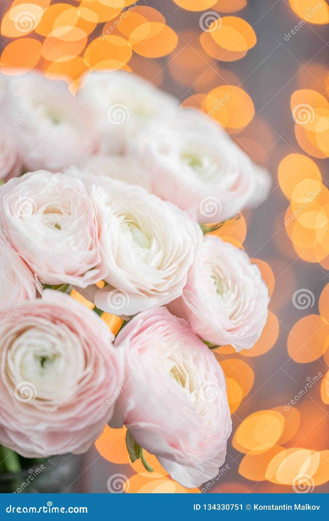 Persisk buttercup Blek grupp - rosa ranunculusblommor i exponeringsglasvas Girlandbokeh på bakgrund Vertikal tapet