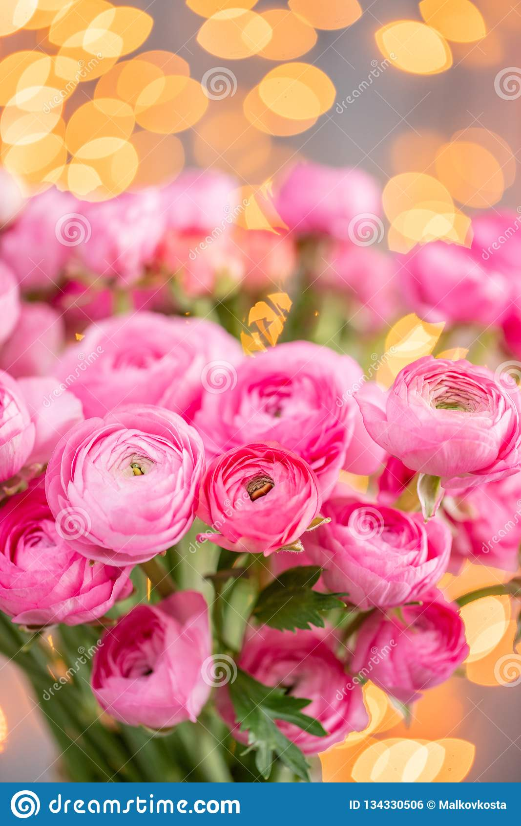 Persisk buttercup Karmosinröda rosa ranunculusblommor för grupp i exponeringsglasvas Girlandbokeh på bakgrund Vertikal tapet