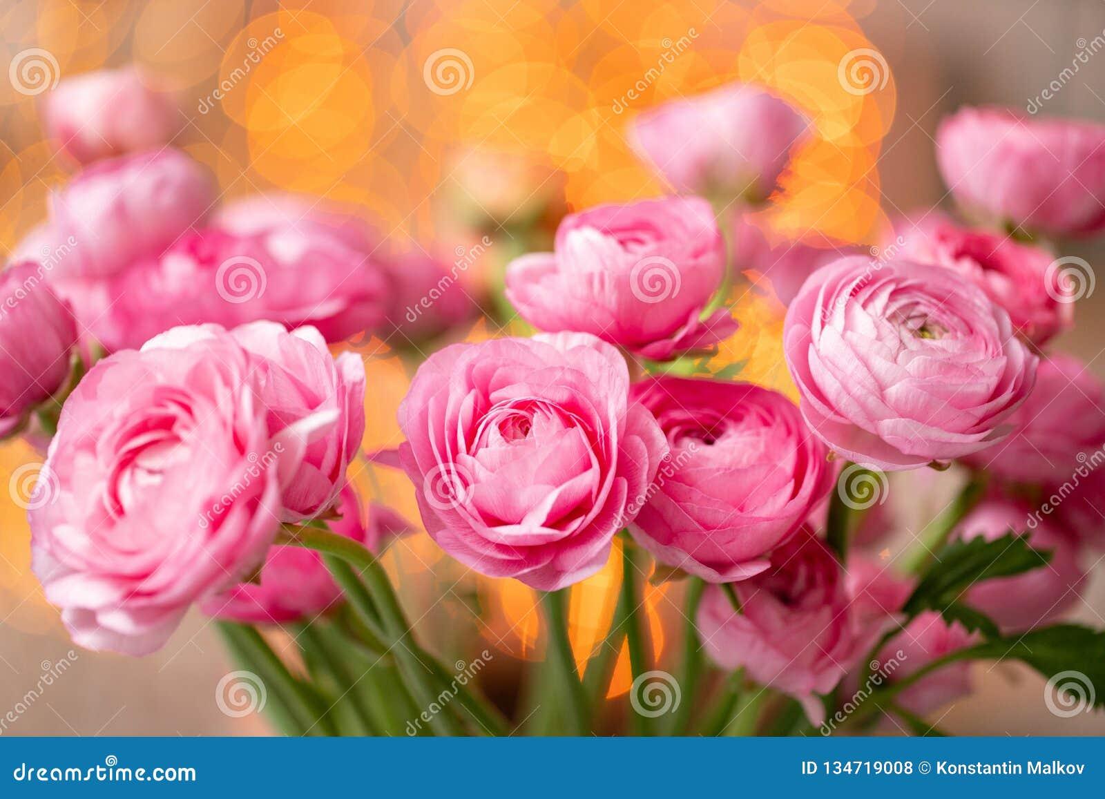 Persisk buttercup Karmosinröda rosa ranunculusblommor för grupp i exponeringsglasvas Girlandbokeh på bakgrund wallpaper