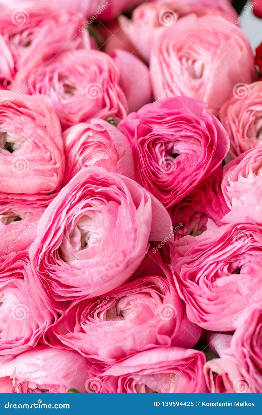 Persisk buttercup Rosa ranunculusblommor för grupp i exponeringsglasvas 0 tillgängliga eps blom- versionwallpaper för 8 Textur av