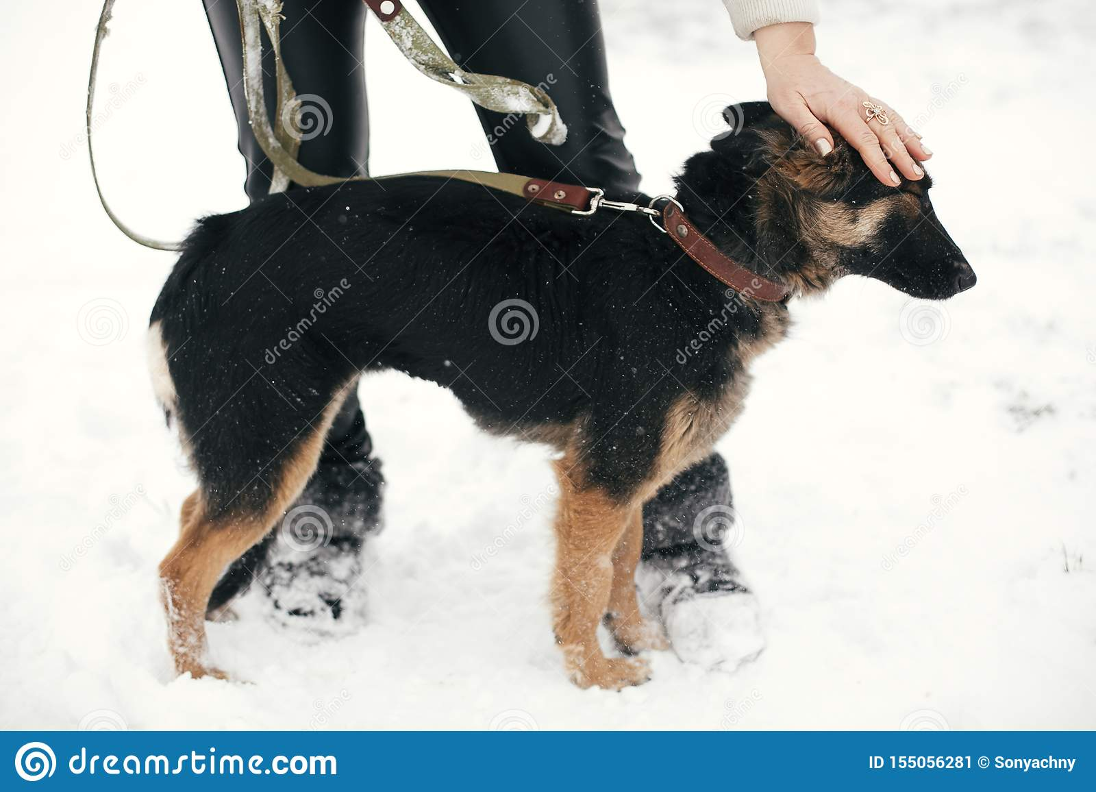 Person caressing cute scared puppy with sad eyes in snowy winter park. People hugging mixed breed german shepherd dog on a walk at