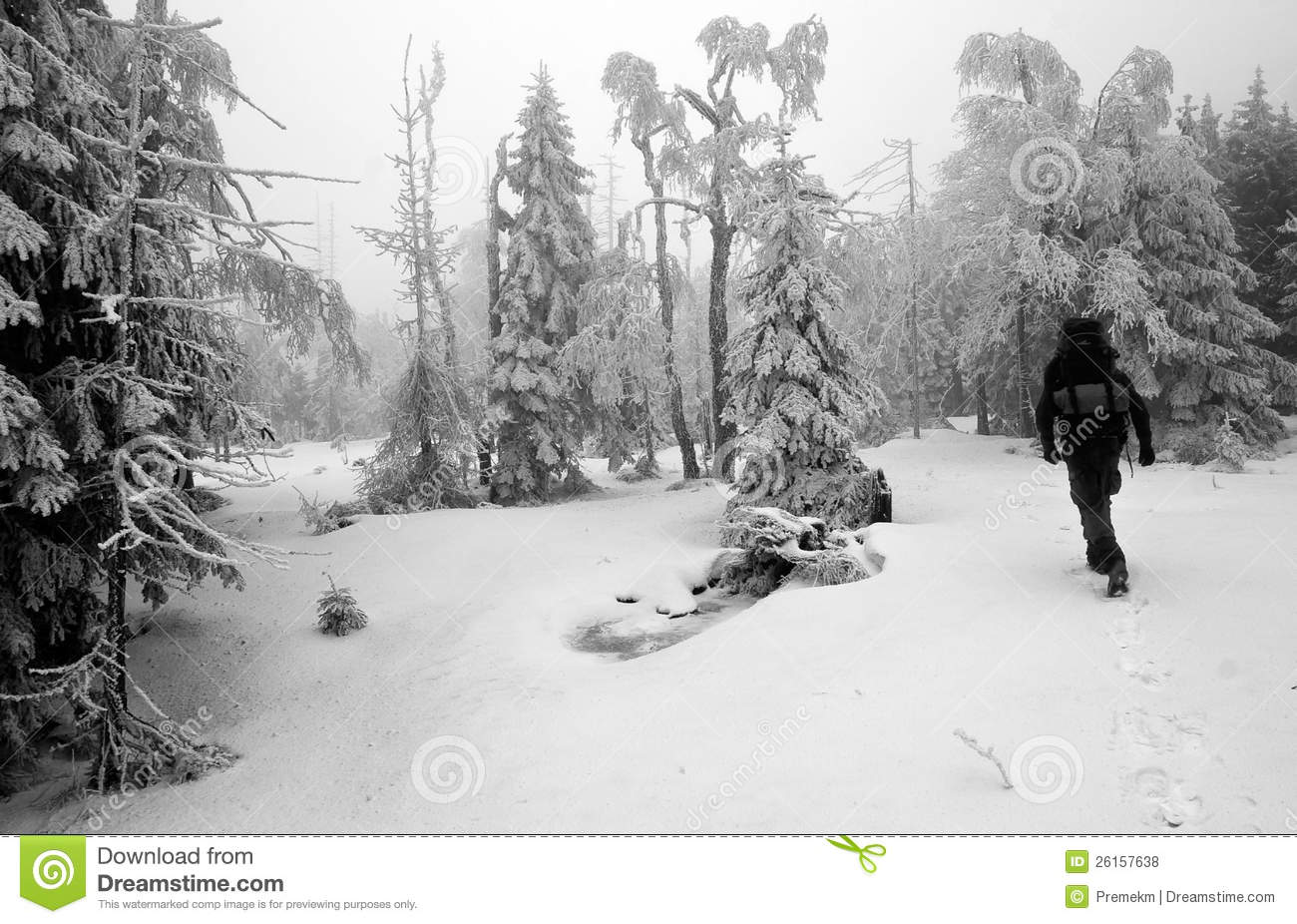 Person Walking in Dark and Misty Forest in Winter
