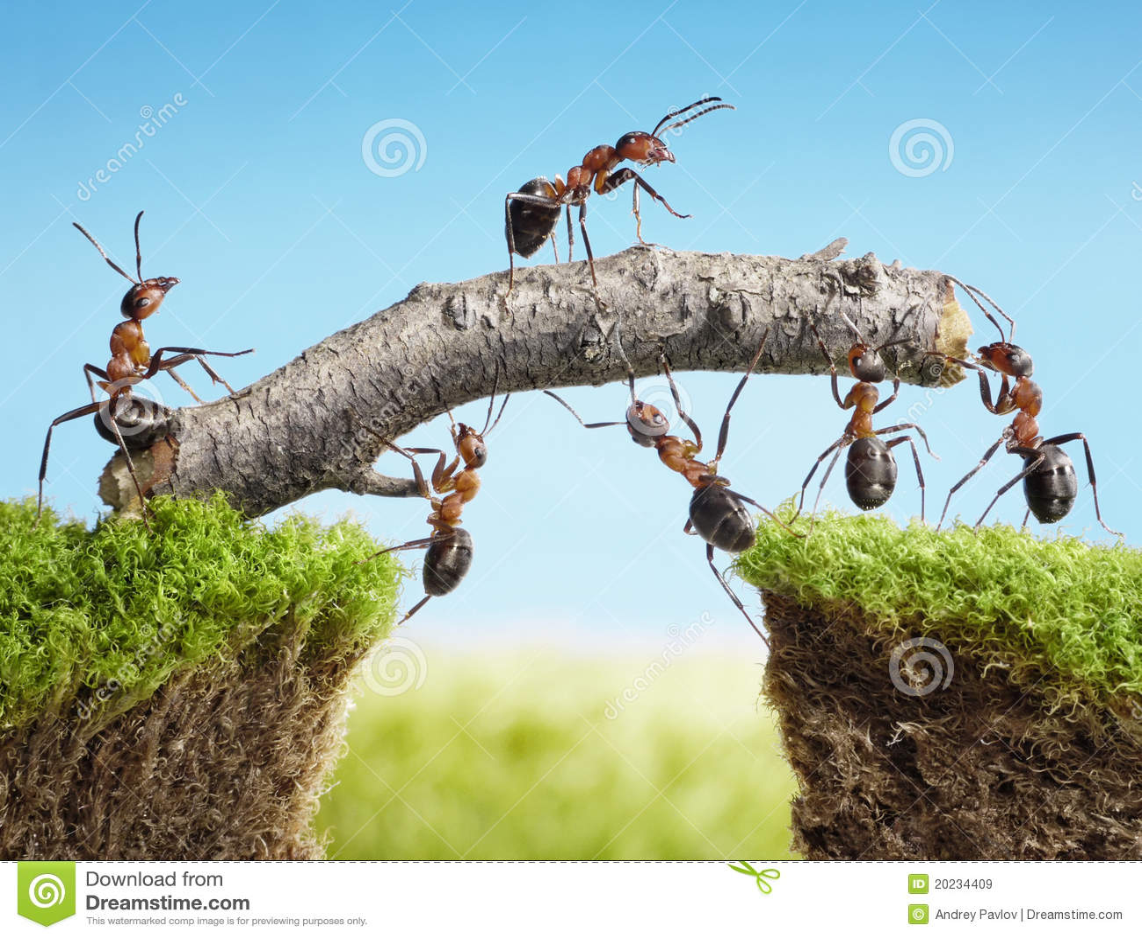 personas de las hormigas que construyen el puente trabajo en equipo imagen de archivo imagen. Black Bedroom Furniture Sets. Home Design Ideas