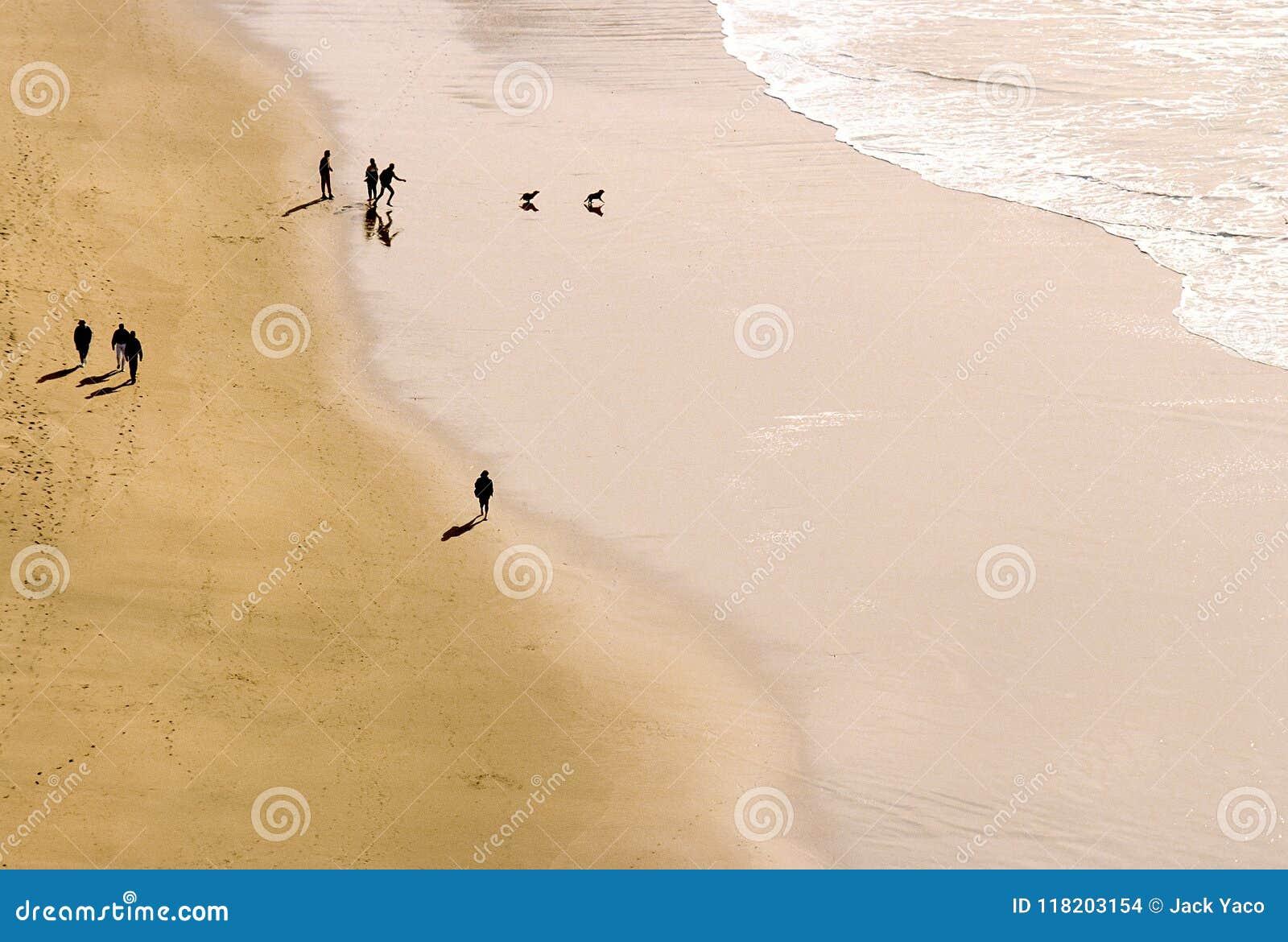 Personnes silhouettées jouant avec un chien sur la plage