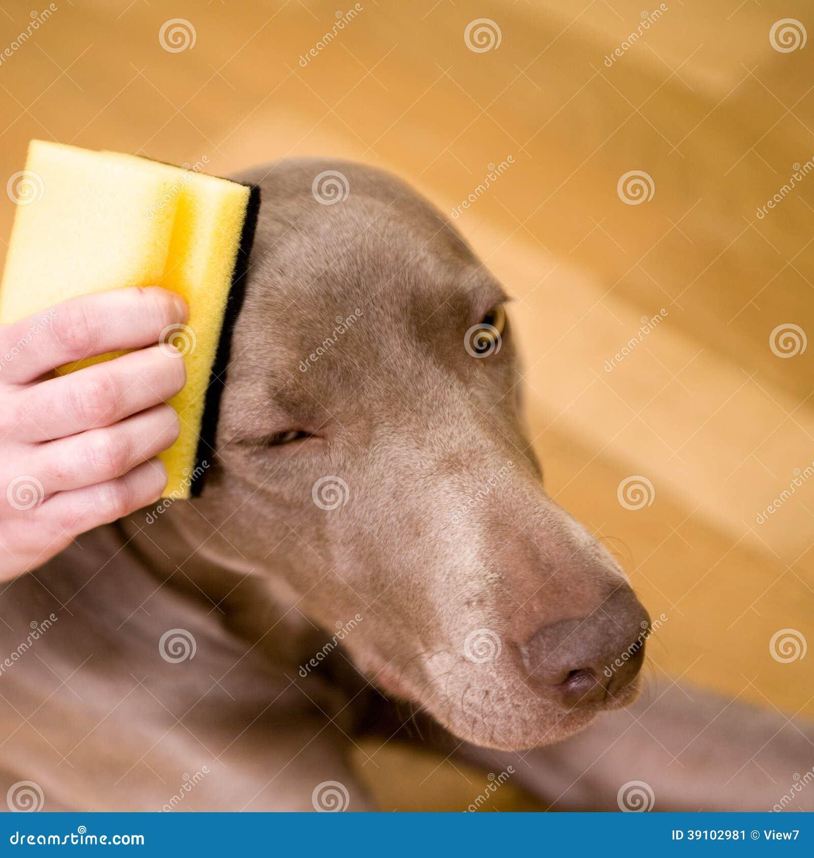 Persoon die een hond wassen