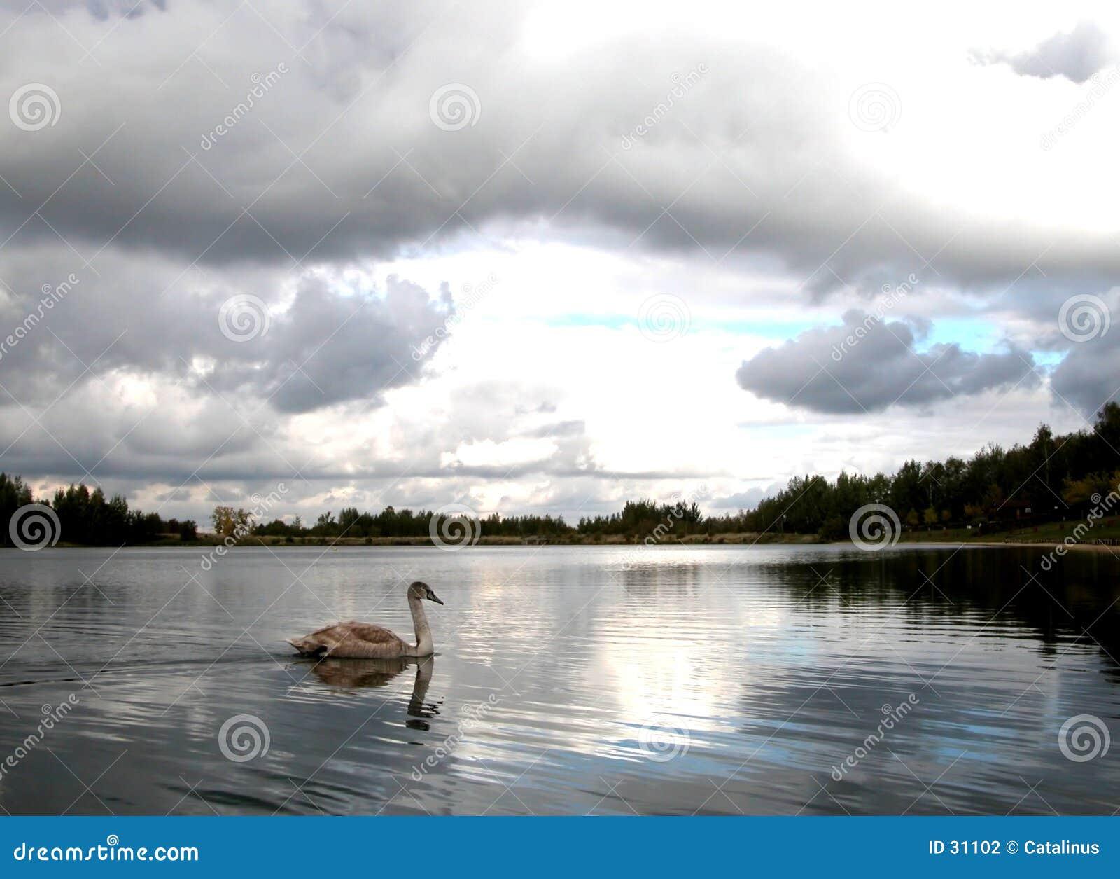 Perspectiva del lago