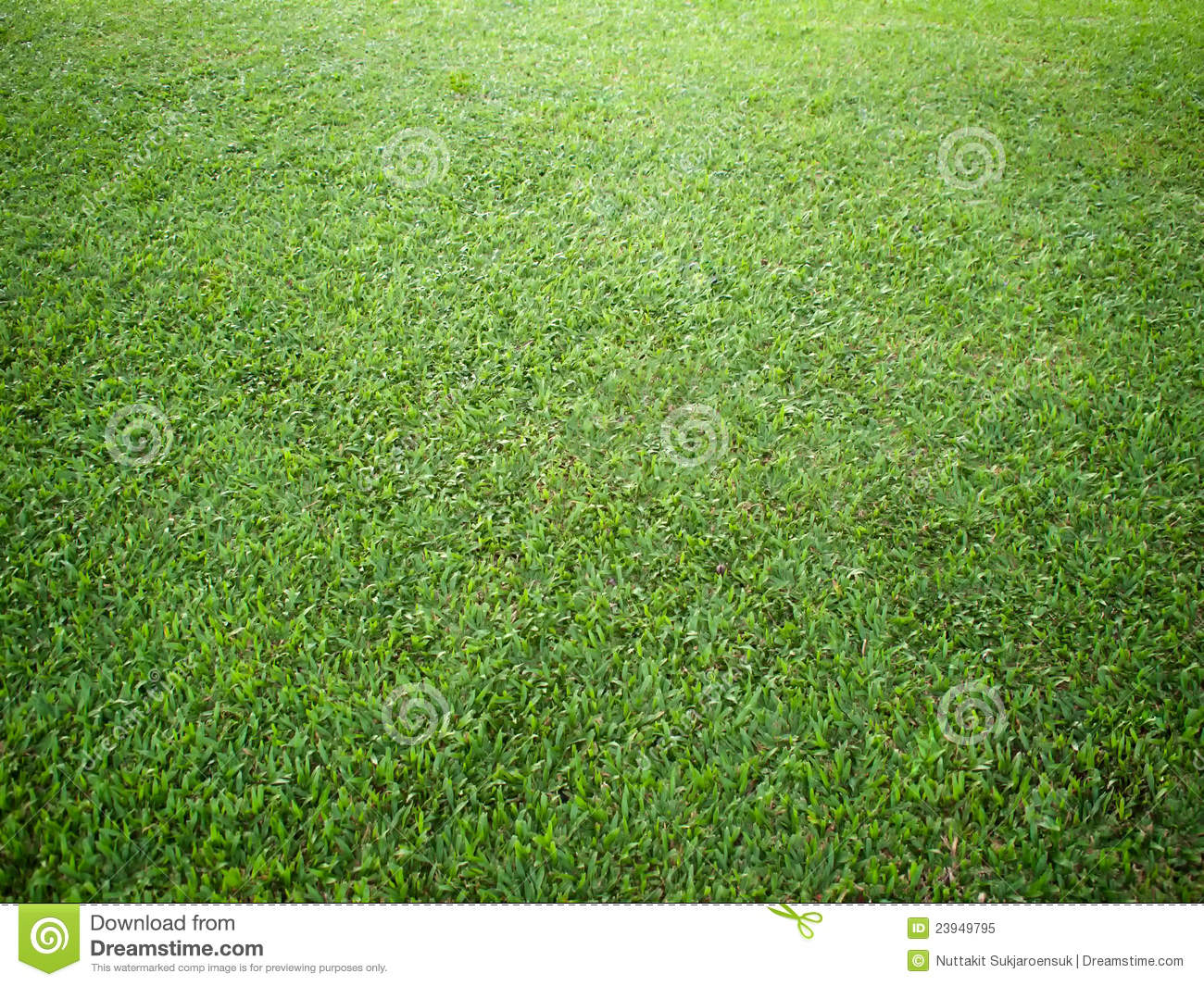 Perspective of grass on ground