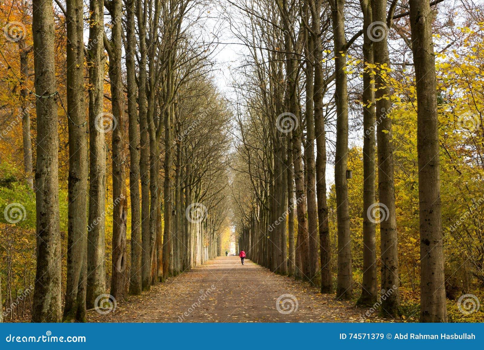 Perspektiven-Ansicht von Bäumen