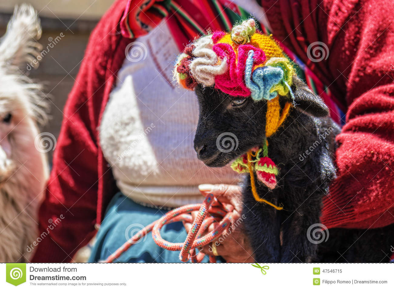 Peru Woman Baby Alpaca Stock Photo Image 47546715