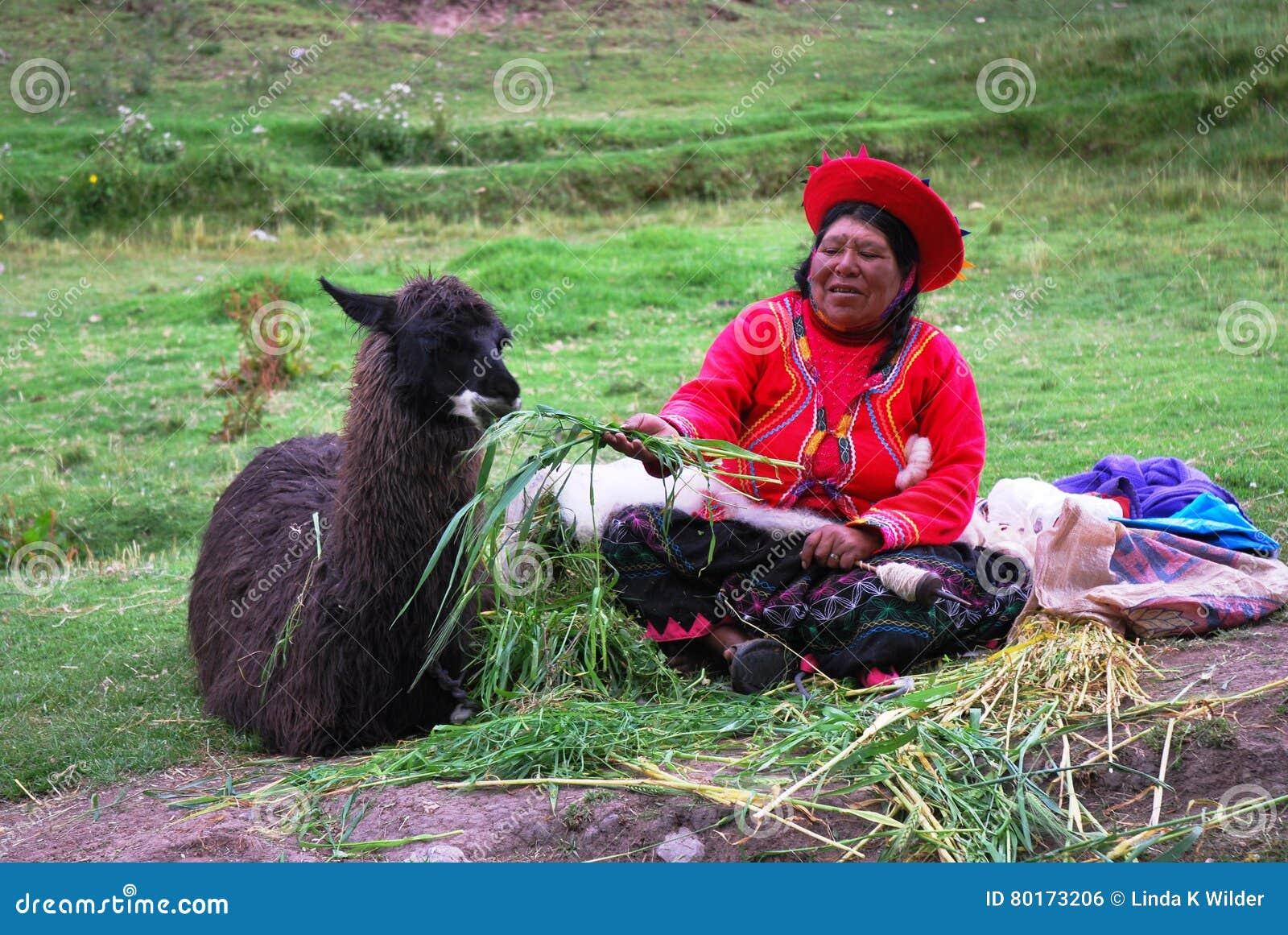 Peruwiańskiej kobiety żywieniowa lama blisko Cusco w Peru