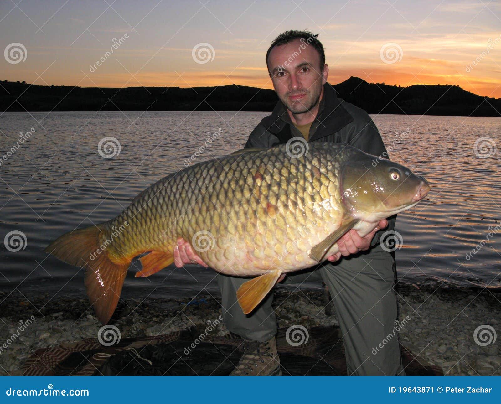 Pesca de la carpa imagen de archivo imagen de pesca for Carpa de rio