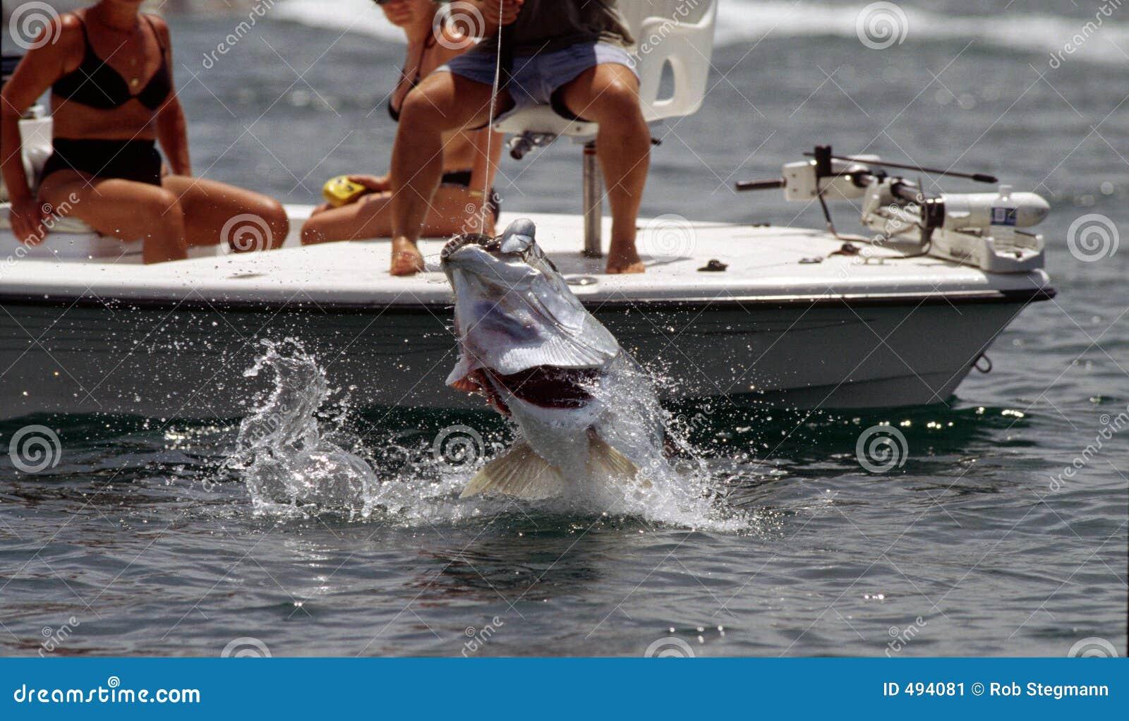 Pesca del tarpone