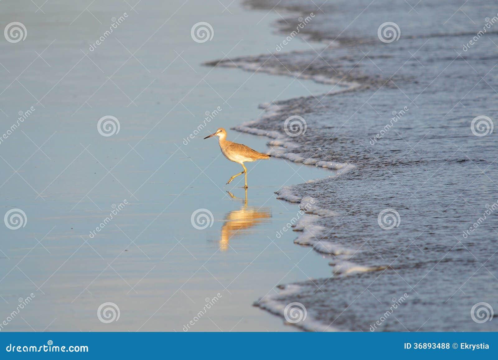 Download Pesca Dell'uccello, EL Espino Di Playa Fotografia Stock - Immagine di colore, campagna: 36893488