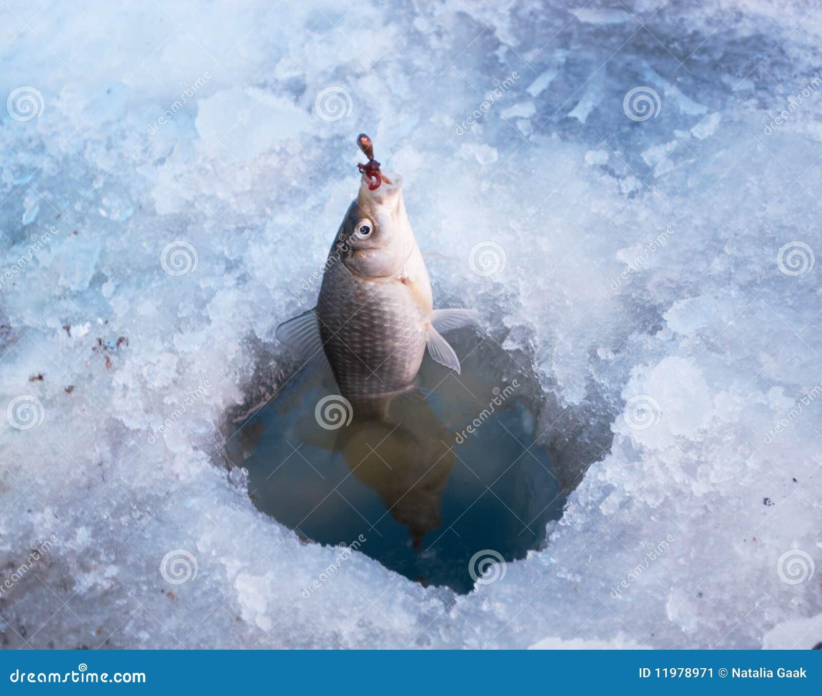 Pesca do inverno