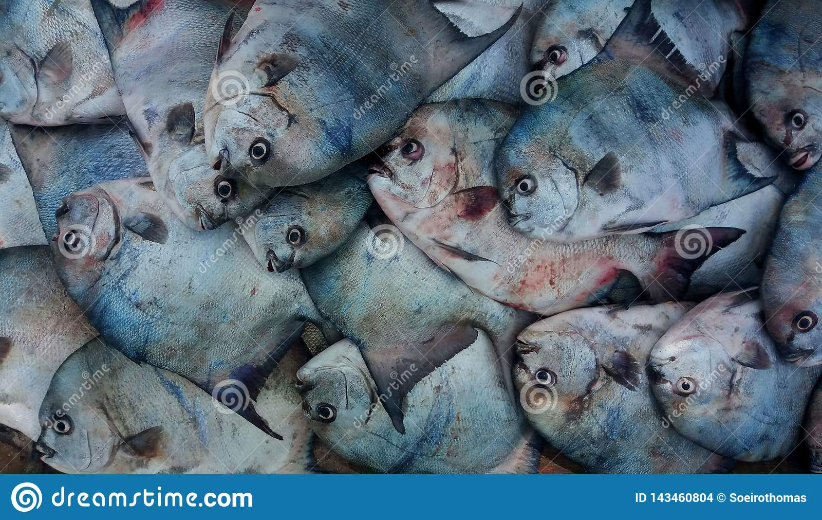 Pesca no Oceano Atlântico