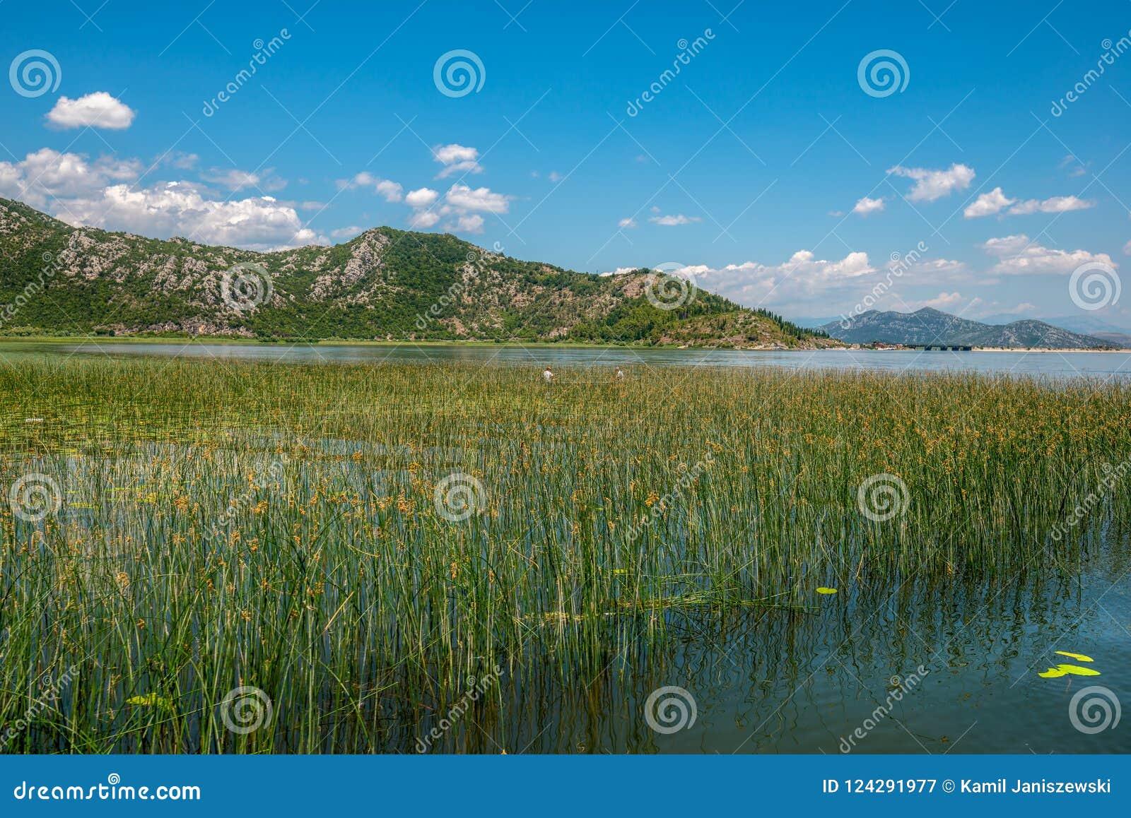 Pescadores nos juncos no lago Skadar em Montenegro