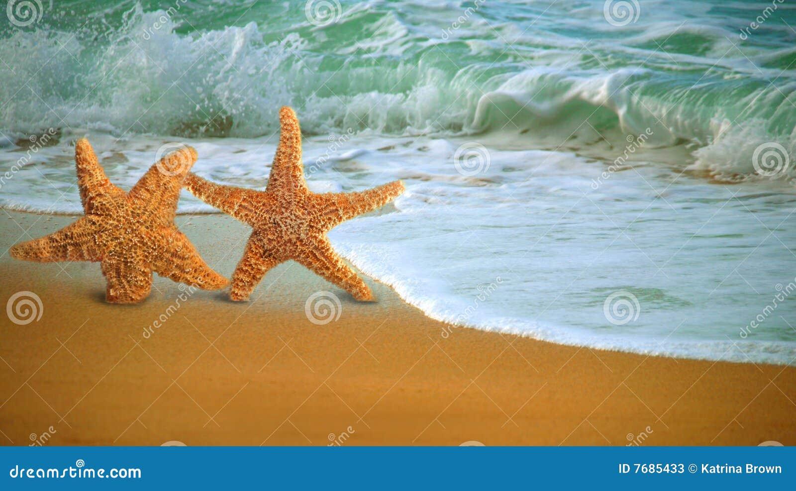 Pescados adorables de la estrella que recorren a lo largo de la playa