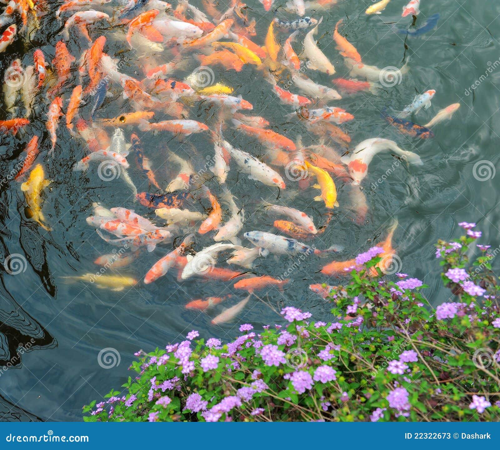 Pescados chinos fotos de archivo imagen 22322673 for Pescado chino