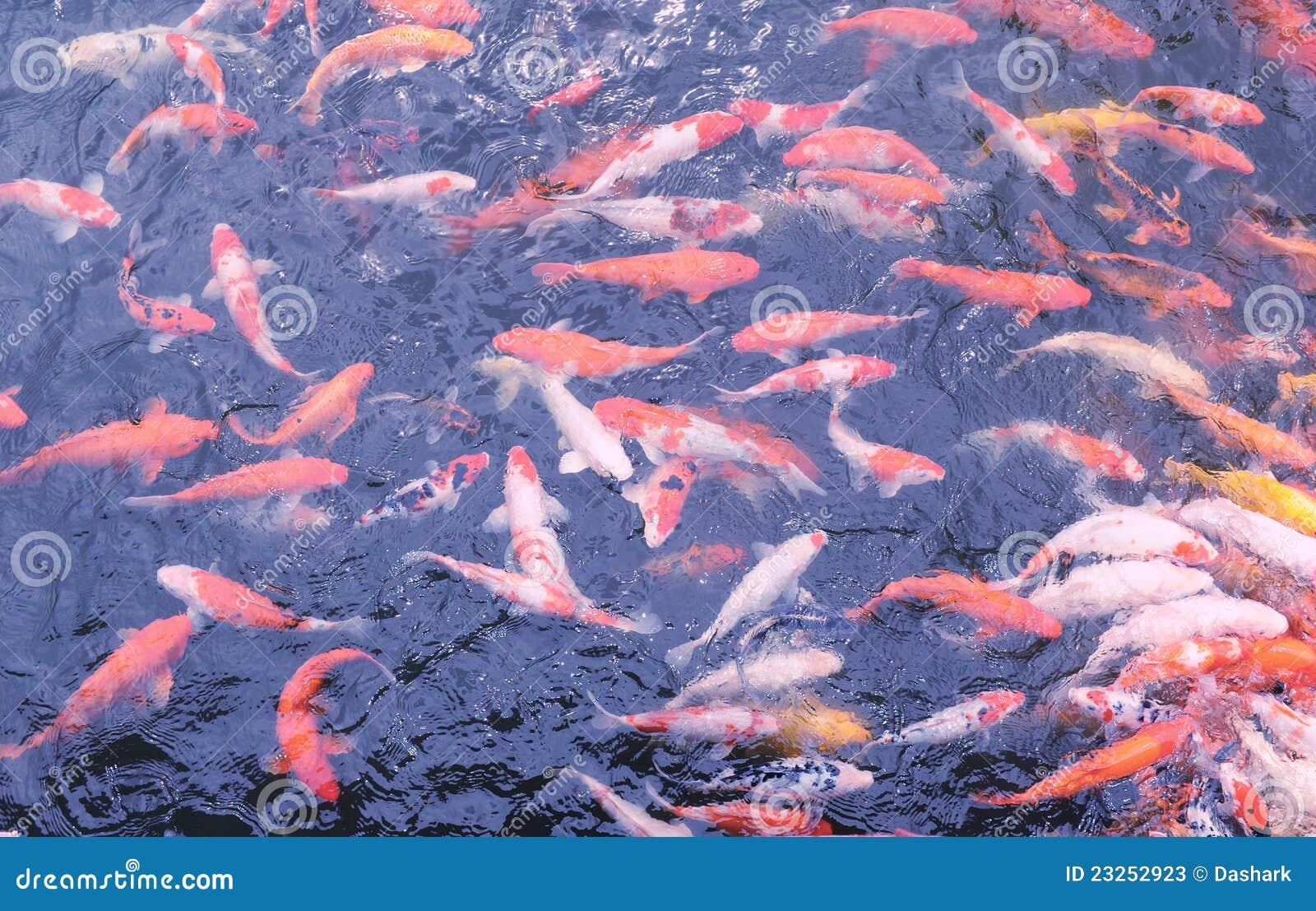Pescados chinos fotos de archivo imagen 23252923 for Pescado chino