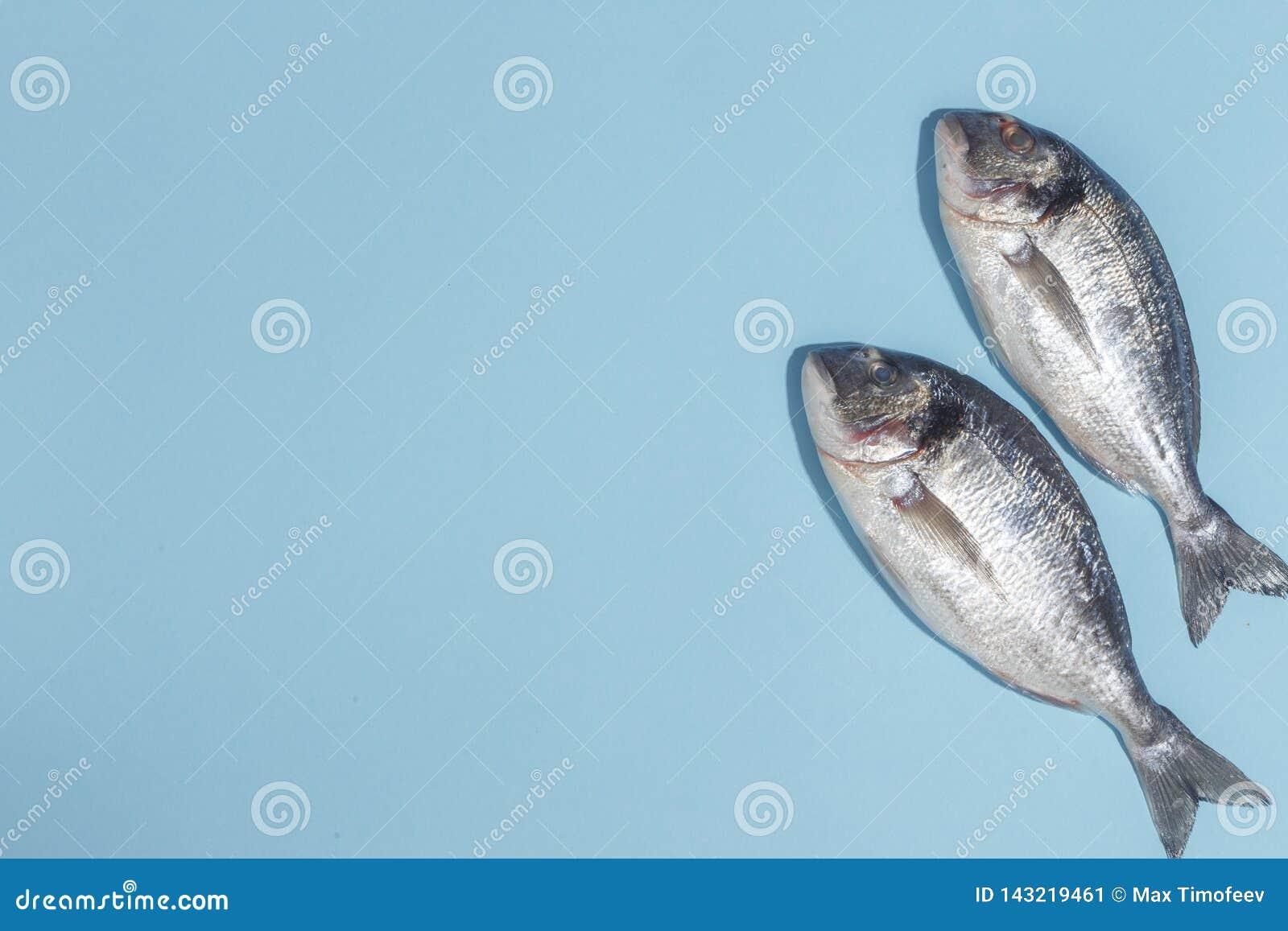 Pescados crudos del dorada con las especias, la sal, el limón y las hierbas, romero en un fondo ligth-azul Visión superior