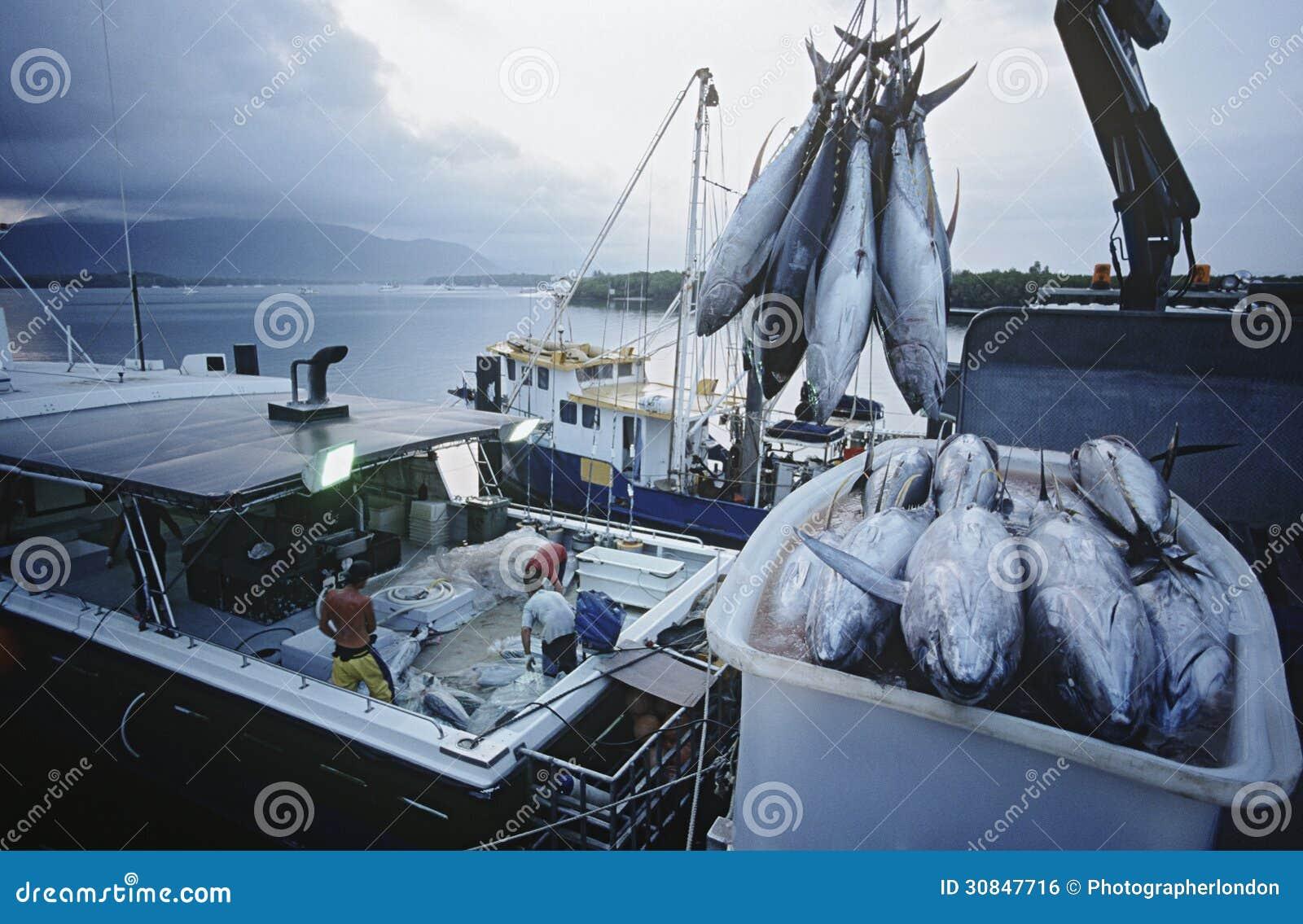 Pescados de atún en envase en los mojones Australia del amanecer del barco de pesca