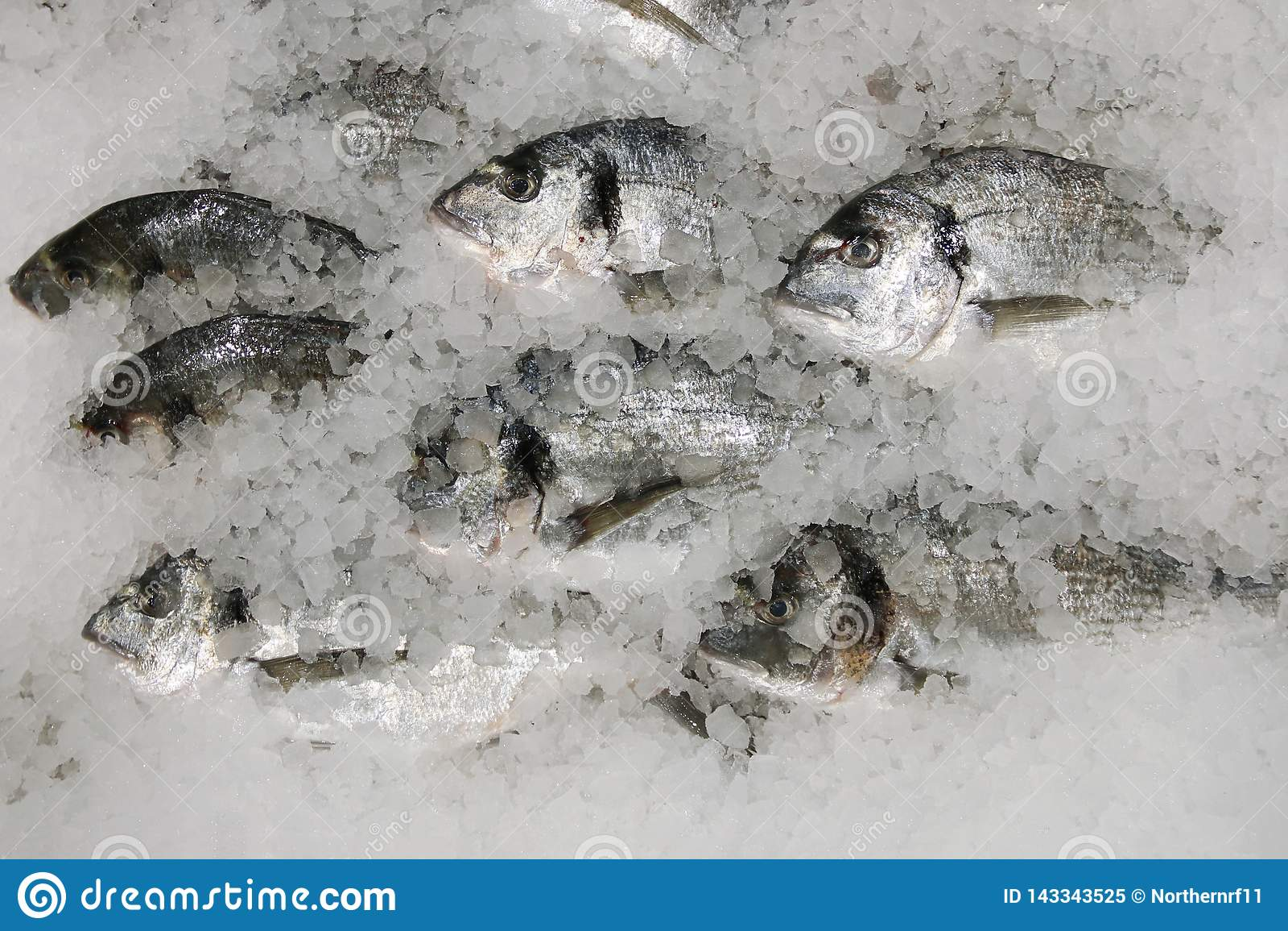 Pescados de Dorado en el hielo pescados frescos del sparus en la opinión de top del hielo