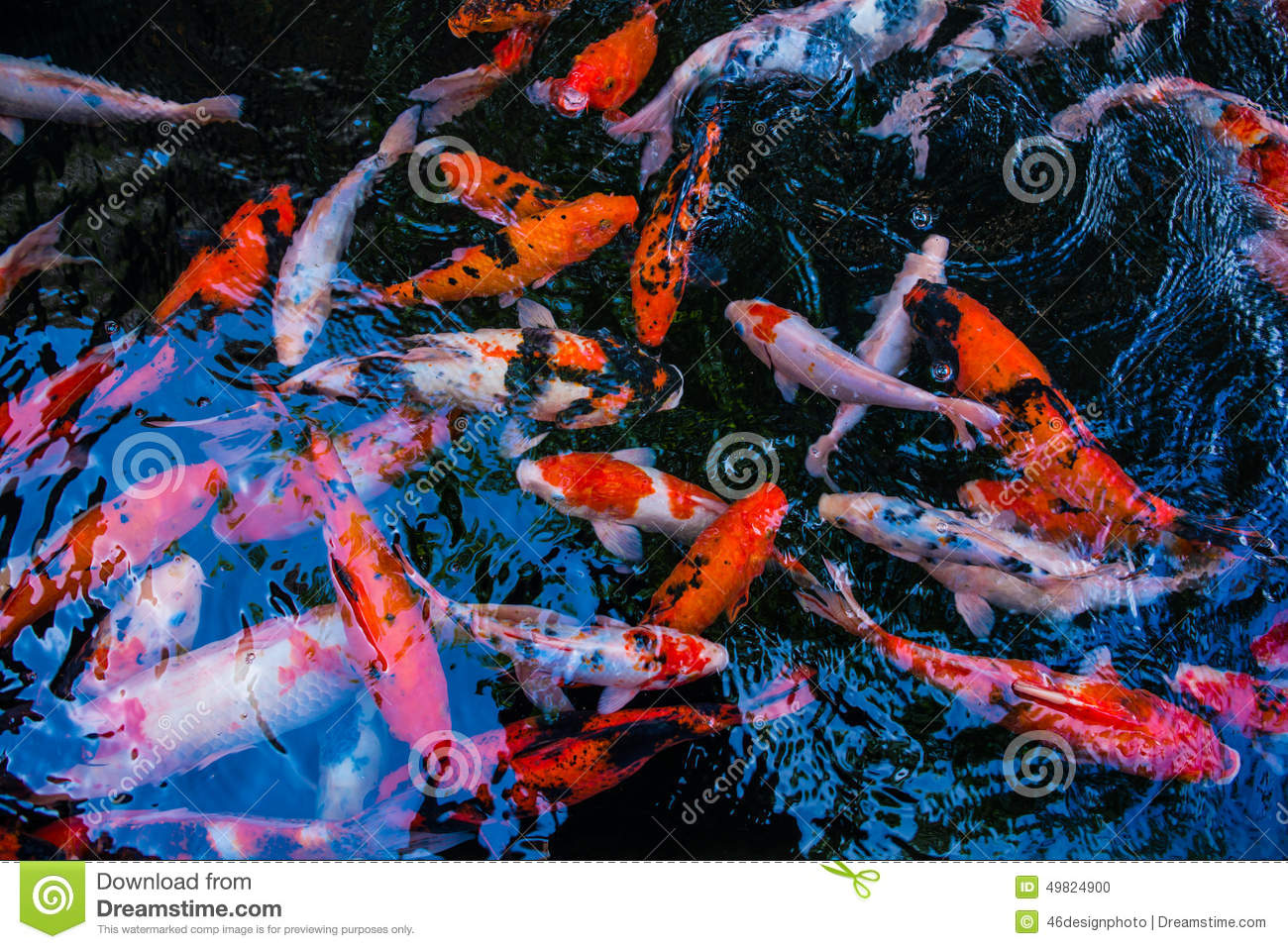 Pescados de koi en los estanques de peces foto de archivo for Peces y estanques