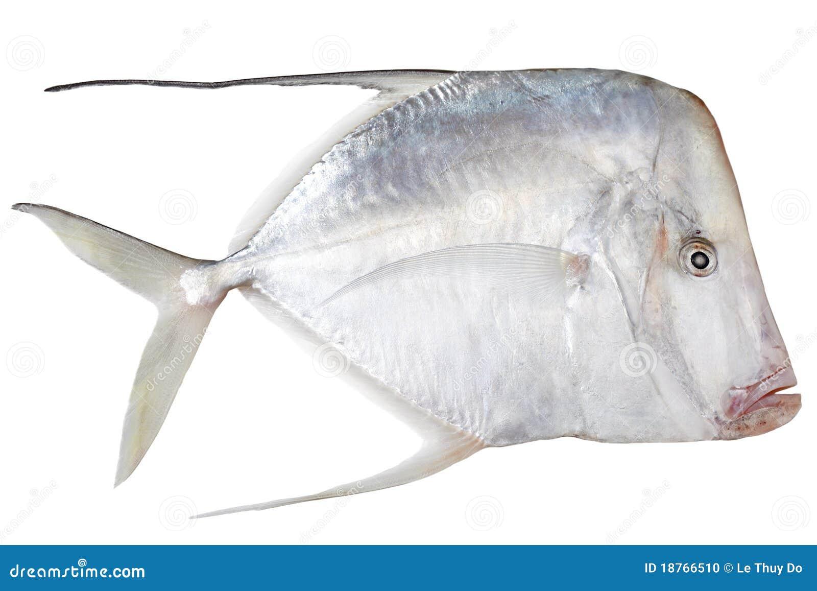 Pescados de los splendens de Eubleekeria