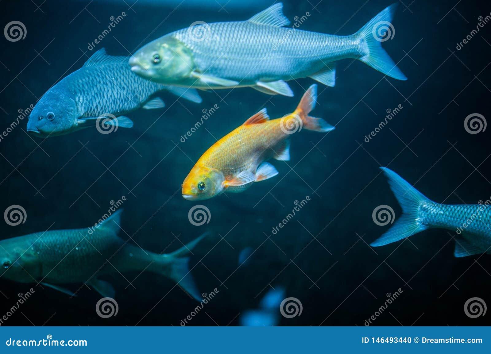 Pescados de mar tristes