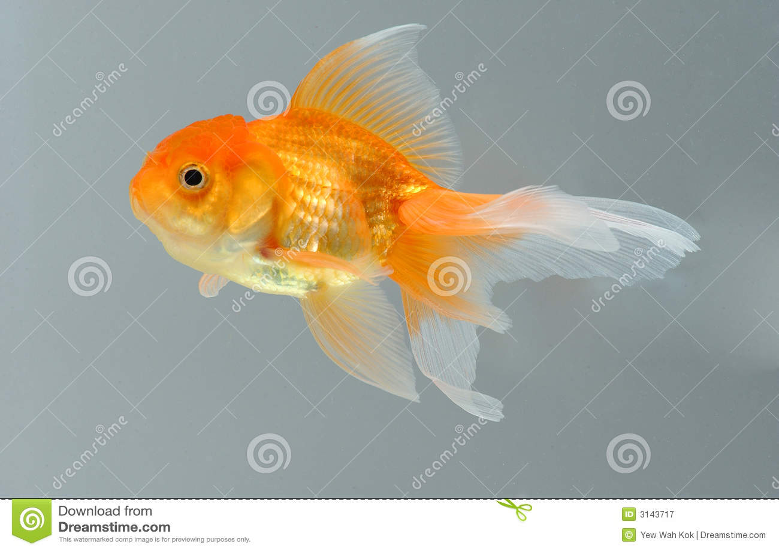 Pescados del oro