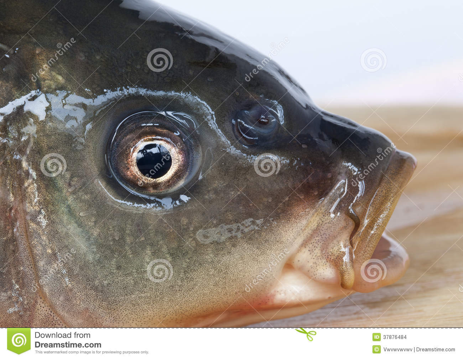 Pescados el tragar
