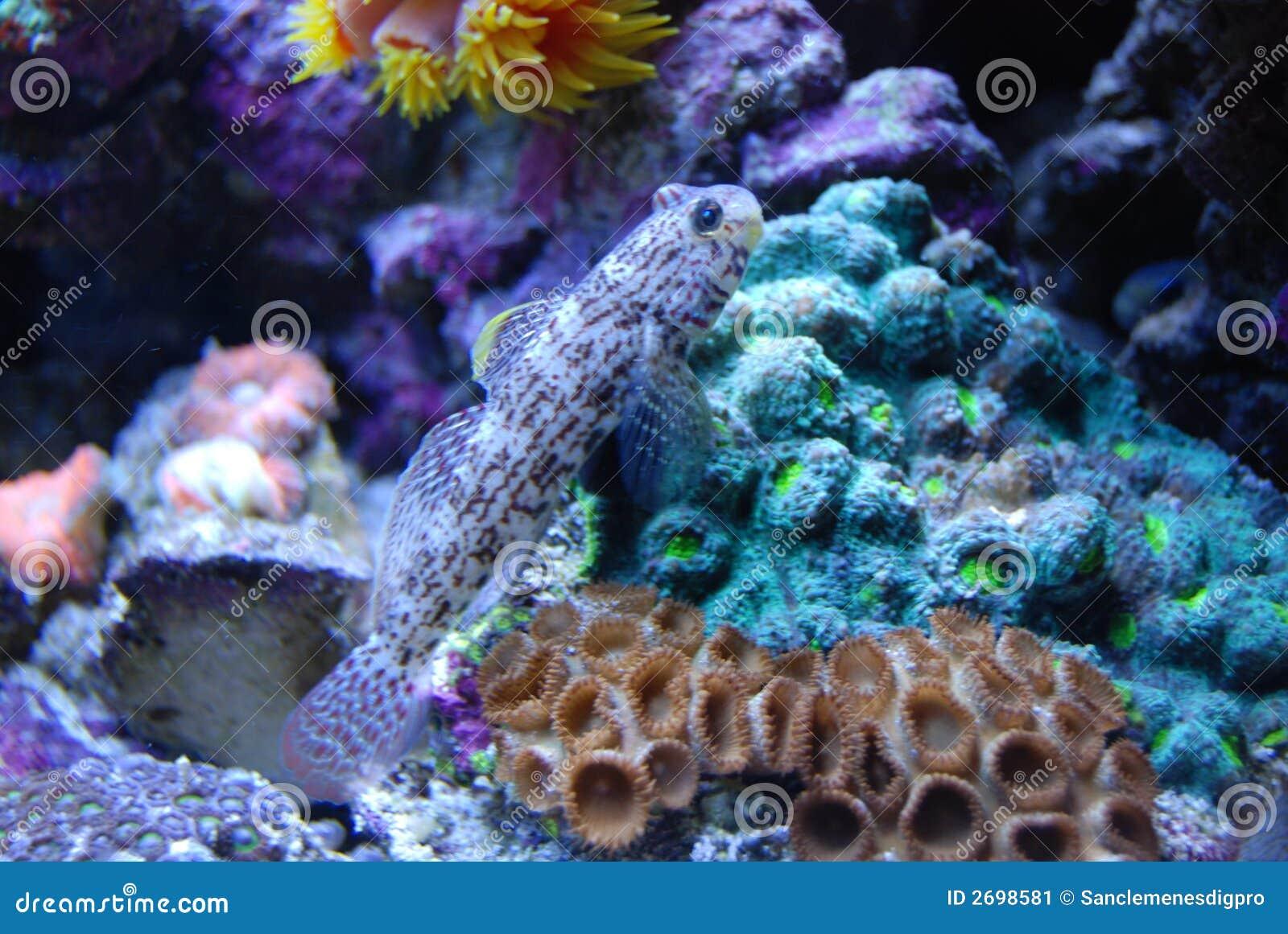 Pescados en coral
