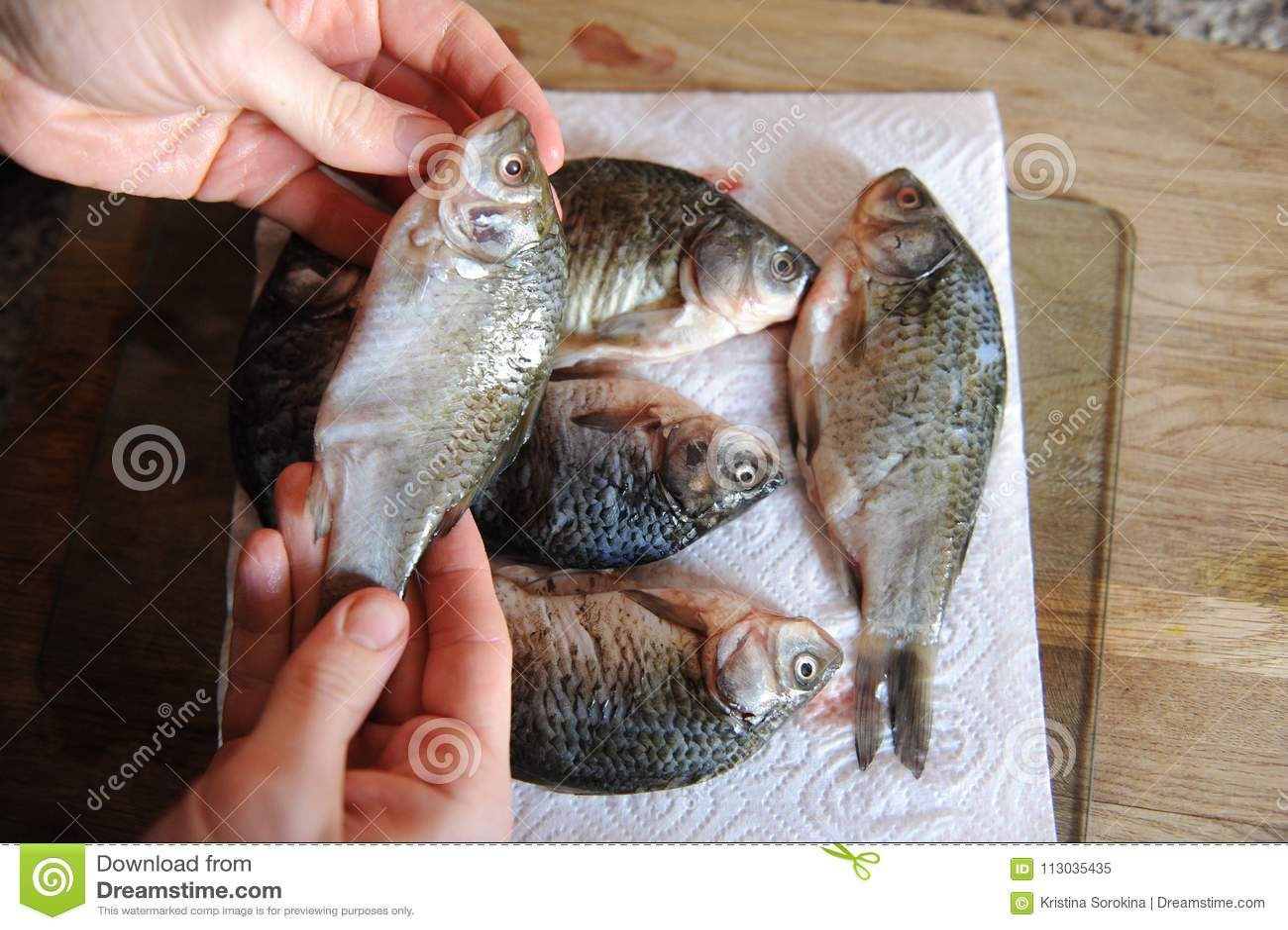 Pescados frescos crudos enteros en tablero cortado Carpa en las manos del primer del cocinero