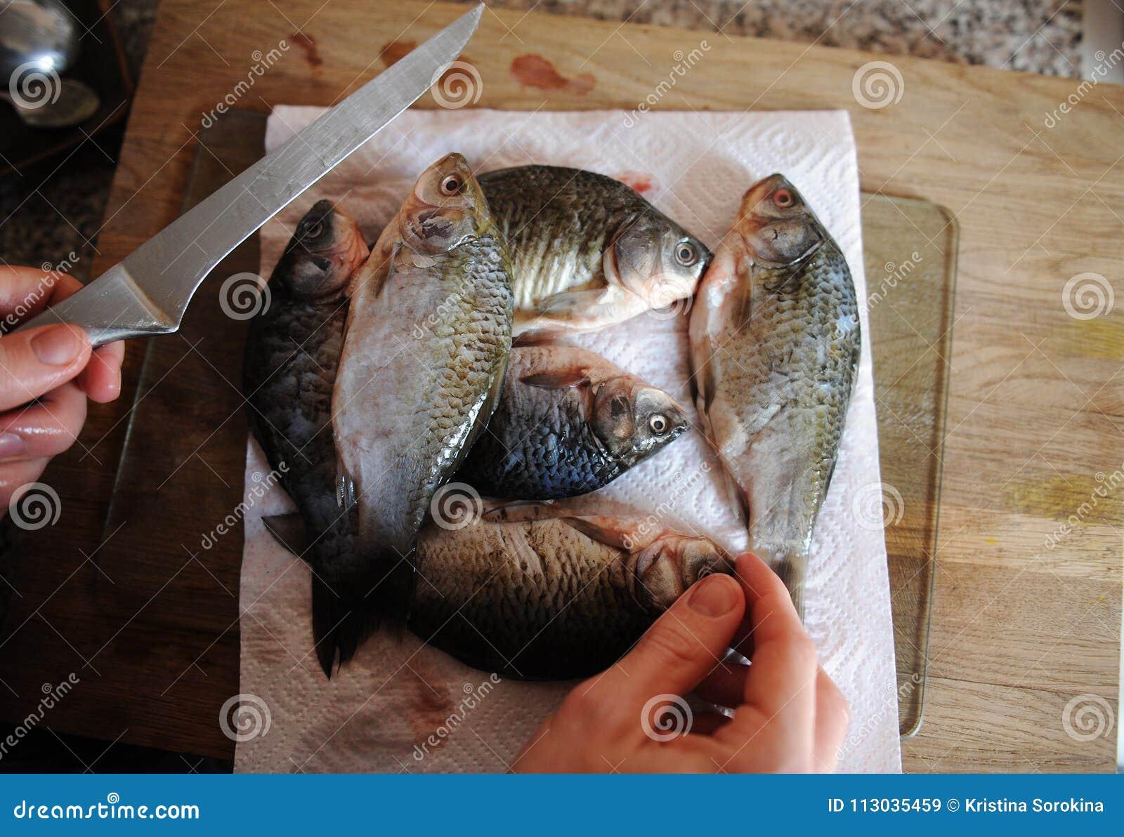 Pescados frescos crudos enteros en tablero cortado Carpa en las manos del primer y del cuchillo del cocinero