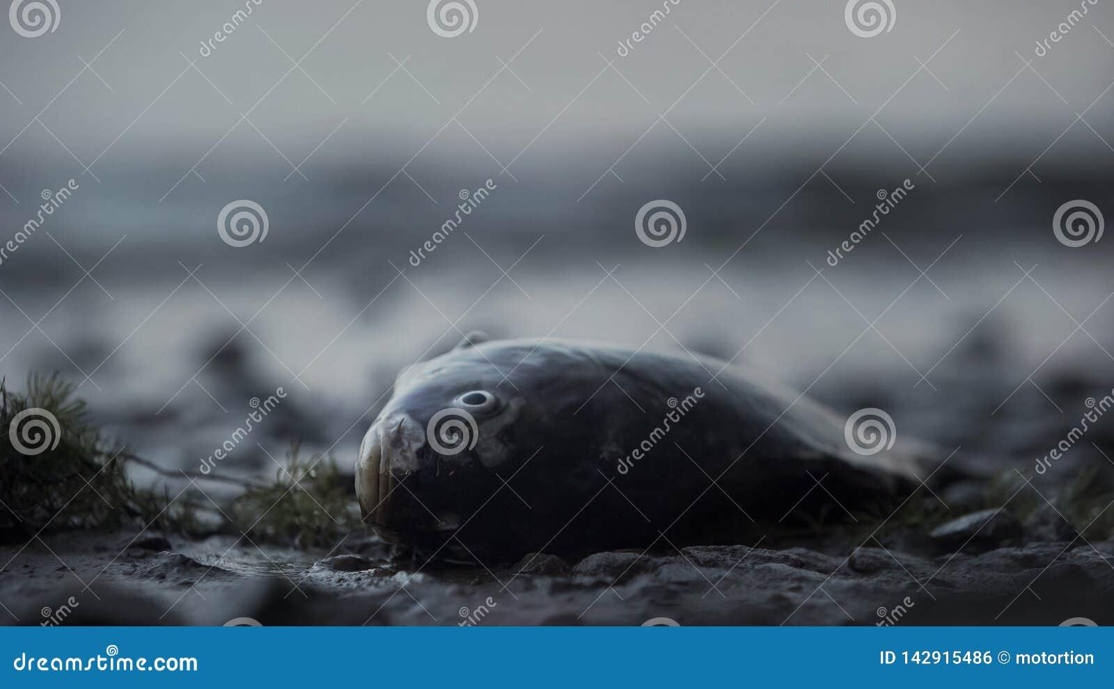 Pescados muertos que mienten en la costa, tragedia en el océano, desastre ambiental, ecología