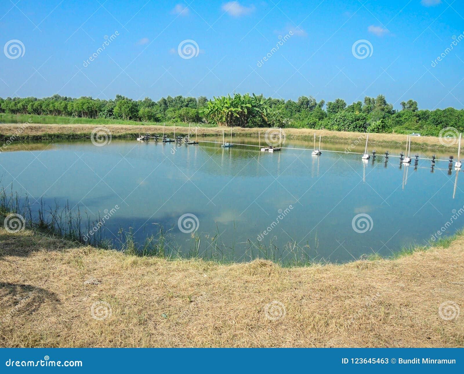 Pescados o camarón al aire libre que cultivan la charca con el sistema de la aireación del agua de la granja