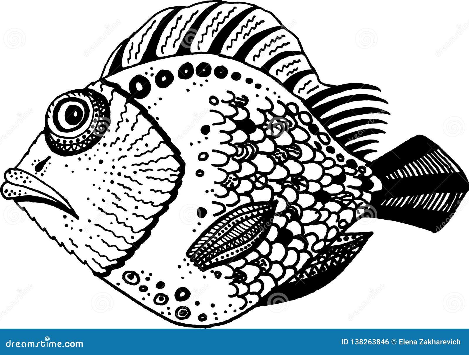 Pescados ornamentales blancos y negros