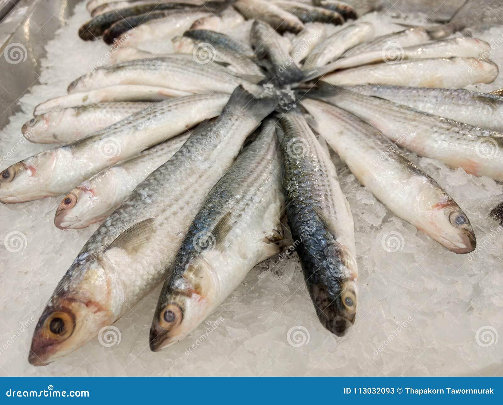 Pescados para la venta